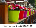 Colorful Pots With Flowers...