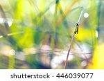 moth butterfly in the grass in...   Shutterstock . vector #446039077