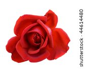 Stock photo red rose isolated on white background 44614480