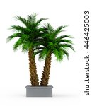 decorative palm tree isolated... | Shutterstock . vector #446425003