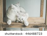 Stock photo cute kitten and mother lying on wooden shelf vintage filter 446488723