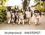 Walk With Many Border Collies...