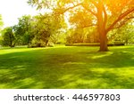 beautiful summer landscape with ... | Shutterstock . vector #446597803