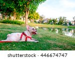 french bulldog waiting his... | Shutterstock . vector #446674747