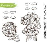 vector sketch of the brazil nut ... | Shutterstock .eps vector #446699467