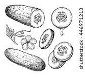 cucumber hand drawn vector set. ...