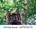 Grey Striped Cat Looking...