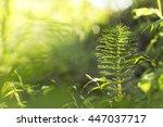 horsetail in dew in the morning ...   Shutterstock . vector #447037717