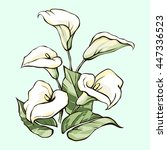 bouquet of white callas on a... | Shutterstock .eps vector #447336523
