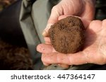 Small photo of one truffle in hands, digging truffles