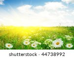white daisies and sun. | Shutterstock . vector #44738992