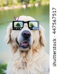 golden retriever with... | Shutterstock . vector #447567517