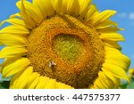 closeup sunflower and working... | Shutterstock . vector #447575377
