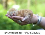 New Born Kitten In Hand. Small...