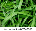 Leaves From A Day Lily With...