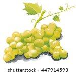 grape of raisin | Shutterstock .eps vector #447914593