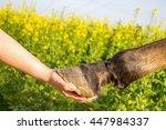 Horse  Hoof  Hand
