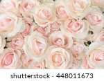 Pink Rose For Backgrounds