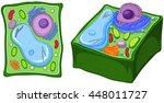 close up diagram of plant cell... | Shutterstock .eps vector #448011727