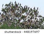 cormorant white tree | Shutterstock . vector #448197697