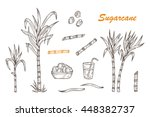 Hand Drawn Sugar Cane Set....