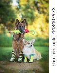 two dogs in rain boots holding... | Shutterstock . vector #448407973
