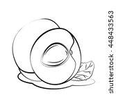apricot   Shutterstock .eps vector #448433563