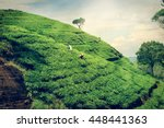 Sri Lanka Tea Plantation