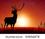 deer ib sunset background...