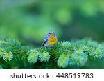 a small warbler of the upper... | Shutterstock . vector #448519783