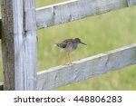 common redshank bird perched on ... | Shutterstock . vector #448806283