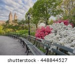 Azaleas In Central Park In The...