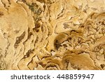 natural texture and pattern on... | Shutterstock . vector #448859947