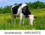 cow on a summer pasture | Shutterstock . vector #449154373