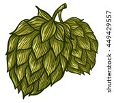 hops vector visual graphic... | Shutterstock .eps vector #449429557