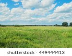 summer landscape. green grass... | Shutterstock . vector #449444413