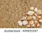 exotic seashells on the seabed... | Shutterstock . vector #449691547