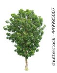 tree  isolated on white... | Shutterstock . vector #449985007
