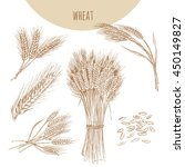 wheat ears  sheaf and grains.... | Shutterstock .eps vector #450149827