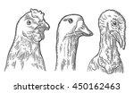 Heads Chicken  Goose And Turke...