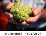 Grapes Harvest In Farmer Hand