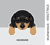 Stock vector vector illustration portrait of dachshund puppy dog isolated 450277813