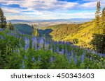 lupine wildflowers above ski... | Shutterstock . vector #450343603