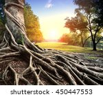 big root of banyan tree in... | Shutterstock . vector #450447553