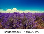 lavender field | Shutterstock . vector #450600493