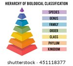 Hierarchy Of Biological...