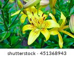 Bright Yellow Lily