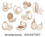 sketched exotic lychee ... | Shutterstock .eps vector #451447357