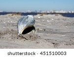 Large Whelk Shell In The Sand...