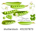 green peas. fully editable... | Shutterstock .eps vector #451537873